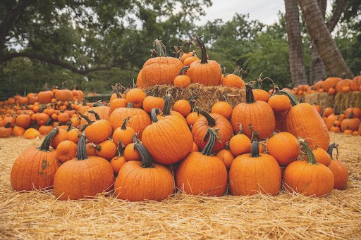 Halloween and fall events abound in Kentucky